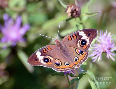 Photograph - Wings Of Wonder - Common Buckeye Butterfly by Kerri Farley