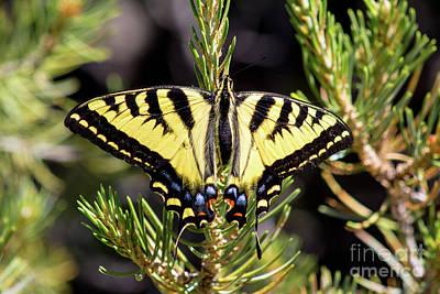Photograph - Wings Open by Steven Parker