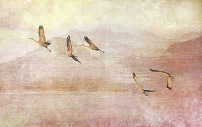 Photograph - Wings Over New Mexico II by Leda Robertson