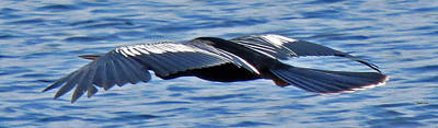 Photograph - Wings Over Water by T Guy Spencer