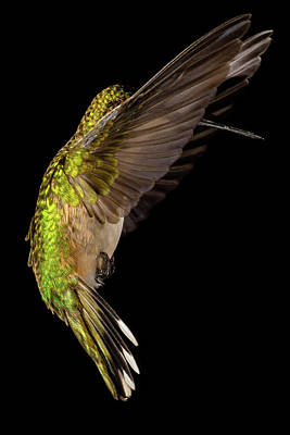 Photograph - Wings by Paul Freidlund
