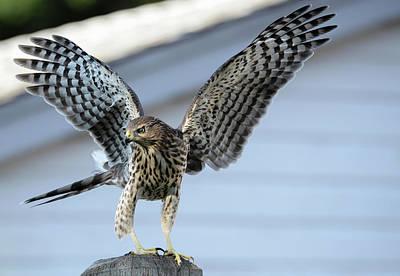 Photograph - Wings by Rae Ann  M Garrett