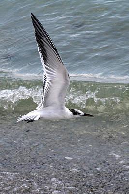 Photograph - Wings Up by John Loreaux