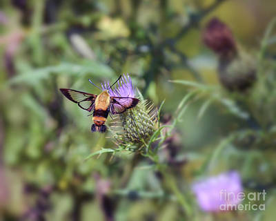 Photograph - Wings You Can See Through by Kerri Farley