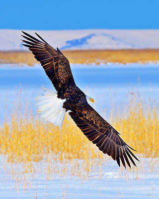 Photograph - Wingspan by Greg Norrell