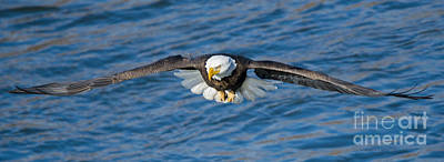 Animals Photos - Wingspan by Mike Dawson