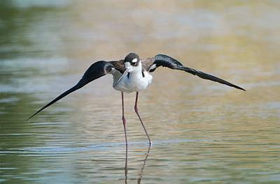 Photograph - Wingspread by Fraida Gutovich