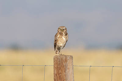 Photograph - Winking Burrowing Owl by Tony Hake