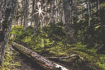 Photograph - Winner Sunburst by Matt Skinner