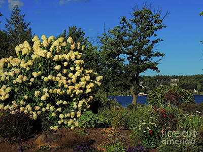 Photograph - Winnipesaukee Garden by Mim White