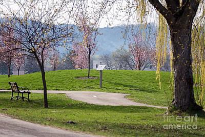 Photograph - Winona Minnesota Path With Cherry Blossoms by Kari Yearous