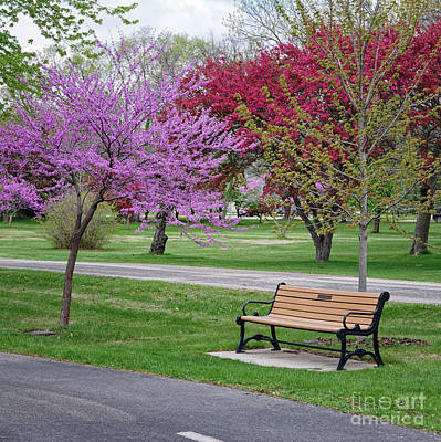 Winona Mn Bench With Flowering Tree By Yearous Art Print
