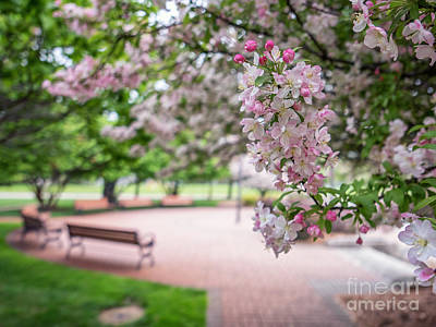 Winona Veterans Memorial With Blossoms Art Print