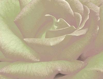 Floral Digital Art Mixed Media - Winsome Rose 2 by Will Borden