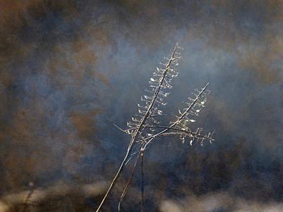 Photograph - Winter 365-296 by Inge Riis McDonald