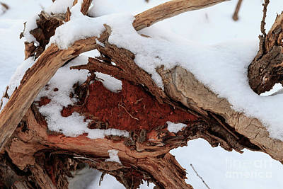 Photograph - Winter Abstract by Richard Smith