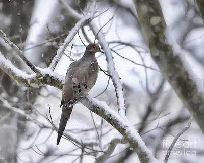 Photograph - Winter Admiration by Kerri Farley