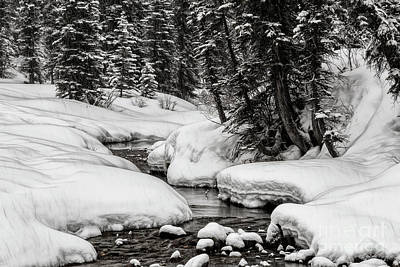Photograph - Winter Alpine Creek by Brad Allen Fine Art