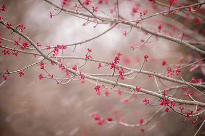 Winter And Spring Print by Terry DeLuco