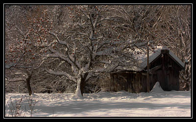 Photograph - Winter Apple Orchard by Sherman Perry