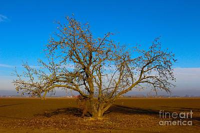 Photograph - Winter Apple Tree by Suzanne Lorenz