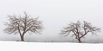 Photograph - Winter Apple Trees 2 by Alan L Graham