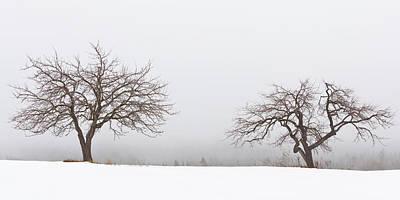 Photograph - Winter Apple Trees 2 by Alan L Graham