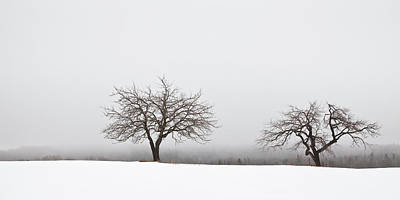 Photograph - Winter Apple Trees  by Alan L Graham