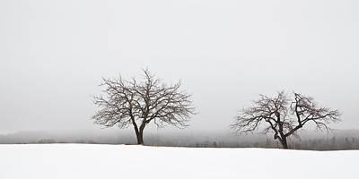 Photograph - Winter Apple Trees  by Alan L Graham