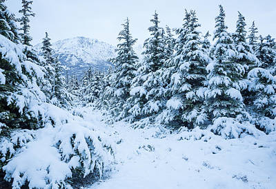 Art Print featuring the photograph Winter Arrives by Tim Newton