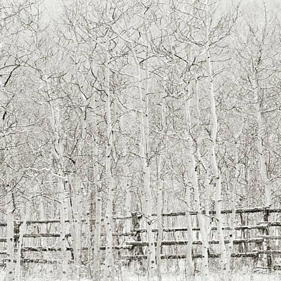 Photograph - Winter Aspen Square by Scott Wheeler