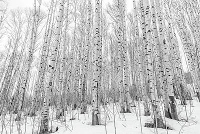 Photograph - Winter Aspens by Eric Glaser