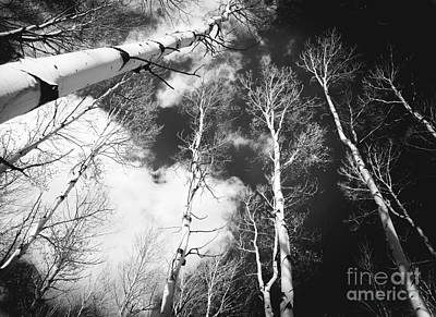 Art Print featuring the photograph Winter Aspens by The Forests Edge Photography - Diane Sandoval