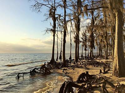 Photograph - Winter At Fontainebleau State Park, Lake Pontchartrain, La by Cindy Croal
