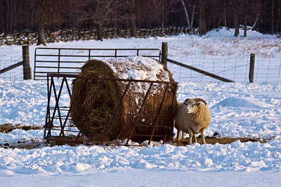 Photograph - Winter At The Farm by Tatiana Travelways