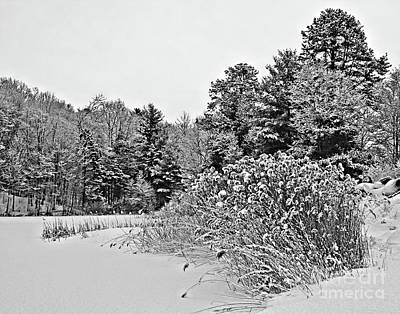 Photograph - Winter At The Pond In Black And White by Smilin Eyes  Treasures