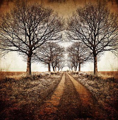 Vanish Photograph - Winter Avenue by Meirion Matthias