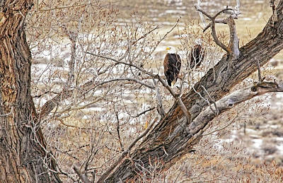 Photograph - Winter Bald Eagles by Jennie Marie Schell