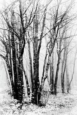 Photograph - Winter Bare Trees In A Spring Fog Bw by Dan Carmichael