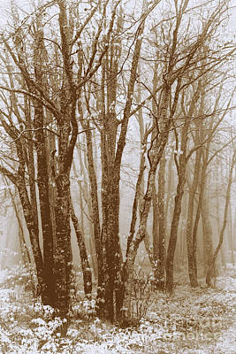 Photograph - Winter Bare Trees In A Spring Fog Se by Dan Carmichael