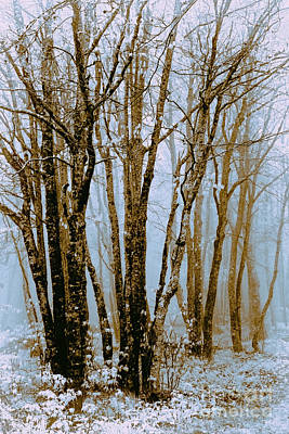 Photograph - Winter Bare Trees In A Spring Fog To by Dan Carmichael