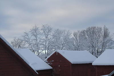 Photograph - Winter Barnscape by Aggy Duveen