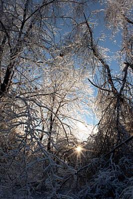 Photograph - Winter Beauty by Joann Copeland-Paul