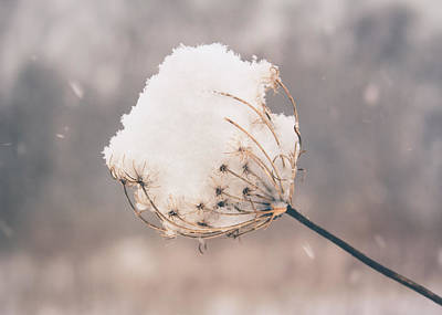 Art Print featuring the photograph Winter Beauty by Viviana  Nadowski