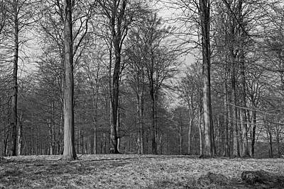 Photograph - Winter Beech Forest by Inge Riis McDonald