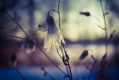 Photograph - Winter Bells No.2 by Desmond Raymond