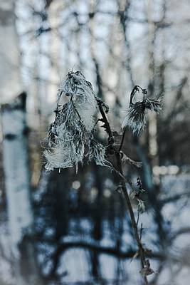Photograph - Winter Bells No.3 by Desmond Raymond