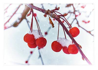 Digital Art - Winter Berries by AGeekonaBike Fine