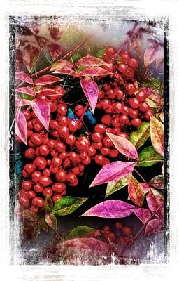 Winter Berries Original by Ches Black