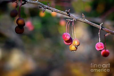Photograph - Winter Berries by Susan Warren